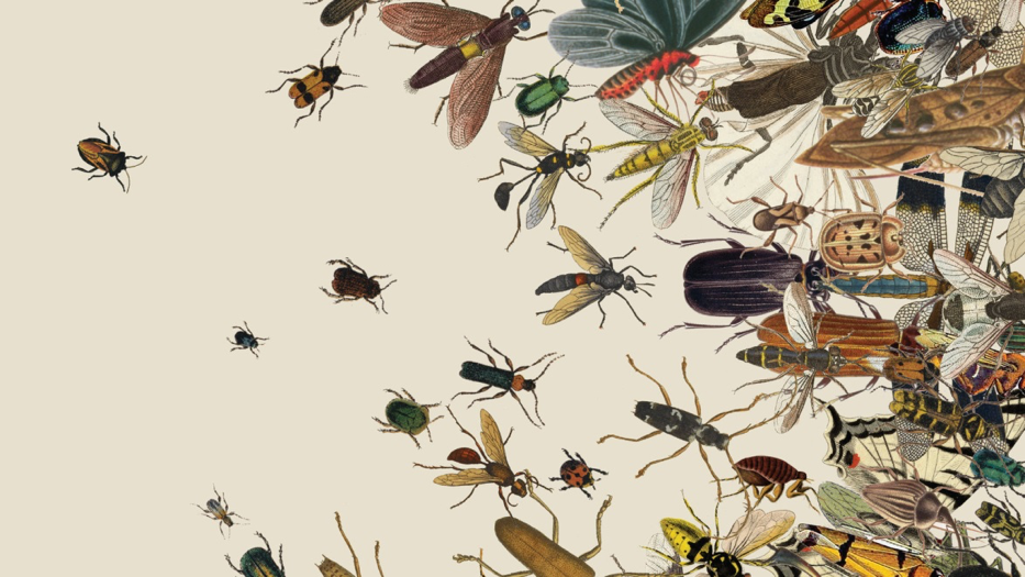 mosquito and insects