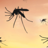 Myths: Can Mosquitoes carry the coronavirus?